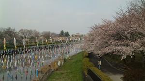 Sakura2010a