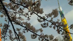 Sakura2010b