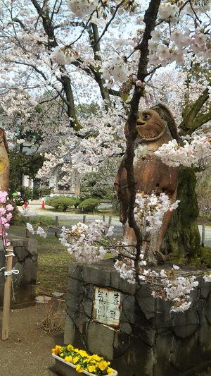 Sakura2010c