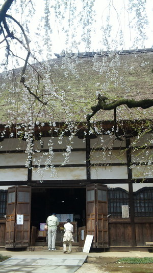 Sakura2010e