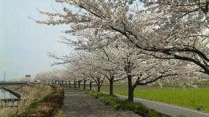 Sakura2010m