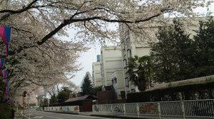 Sakura2010p