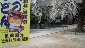 2011sakura12