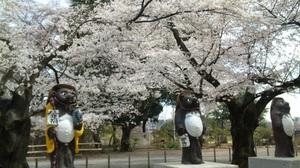 2011sakura6
