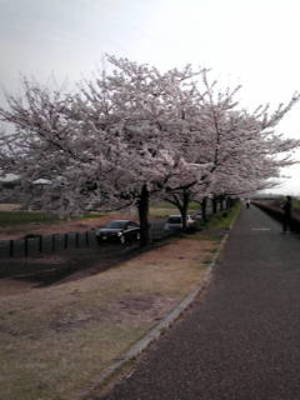 2011sakura19