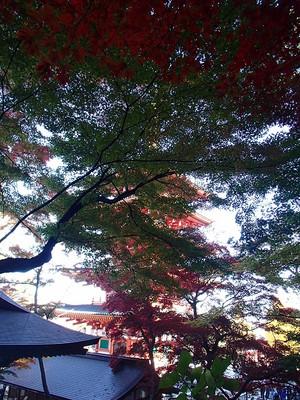 Takahatafudo_11