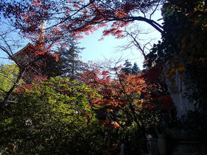 Takahatafudo_4
