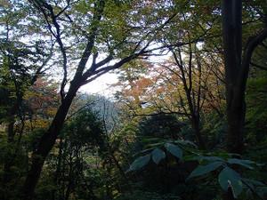 Takaosan13