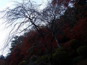 Takaosan8