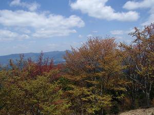 Miwatasu_4