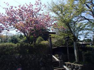 Yoshinoyama_4