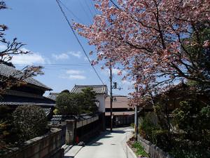 Yoshinoyama_8