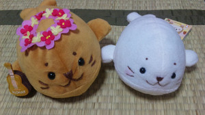 Shirotan4