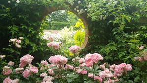 Rosegarden_3
