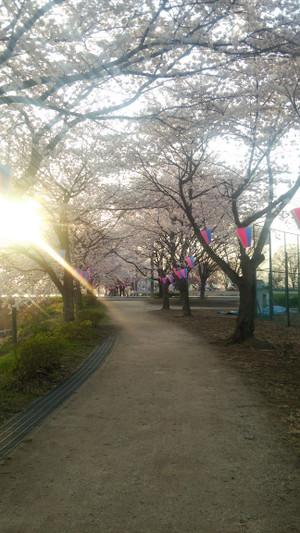 Sakurasanpo_3