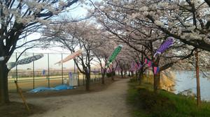 Sakurasanpo_6