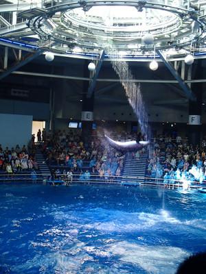 Aquapark_11