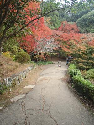 Mifuneyama_5