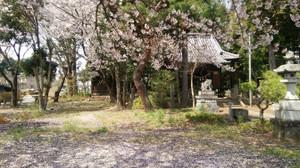 2017410sakura_2
