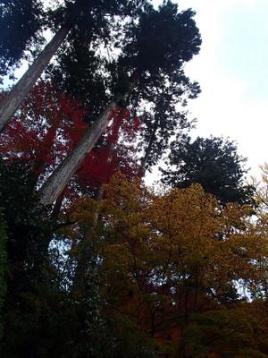 Kiyomizushimane_9