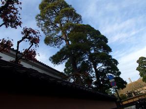 Kurashikimmawari_5